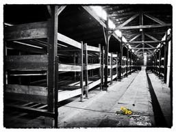 Graham Auschwitz Bunkhouse.jpg