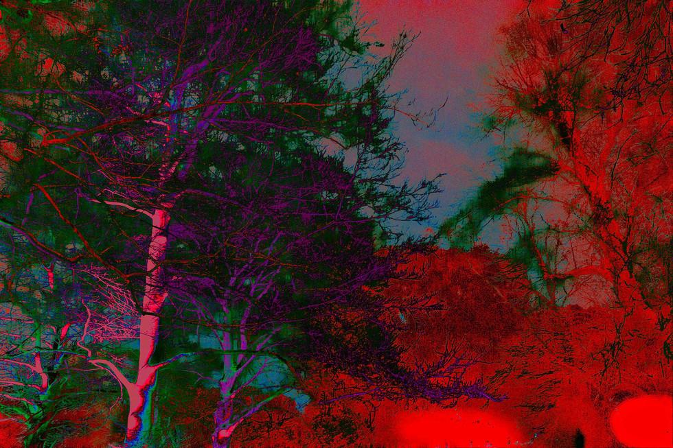 Kew Tree #04d