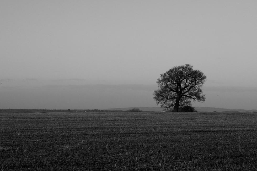 England Countryside #28