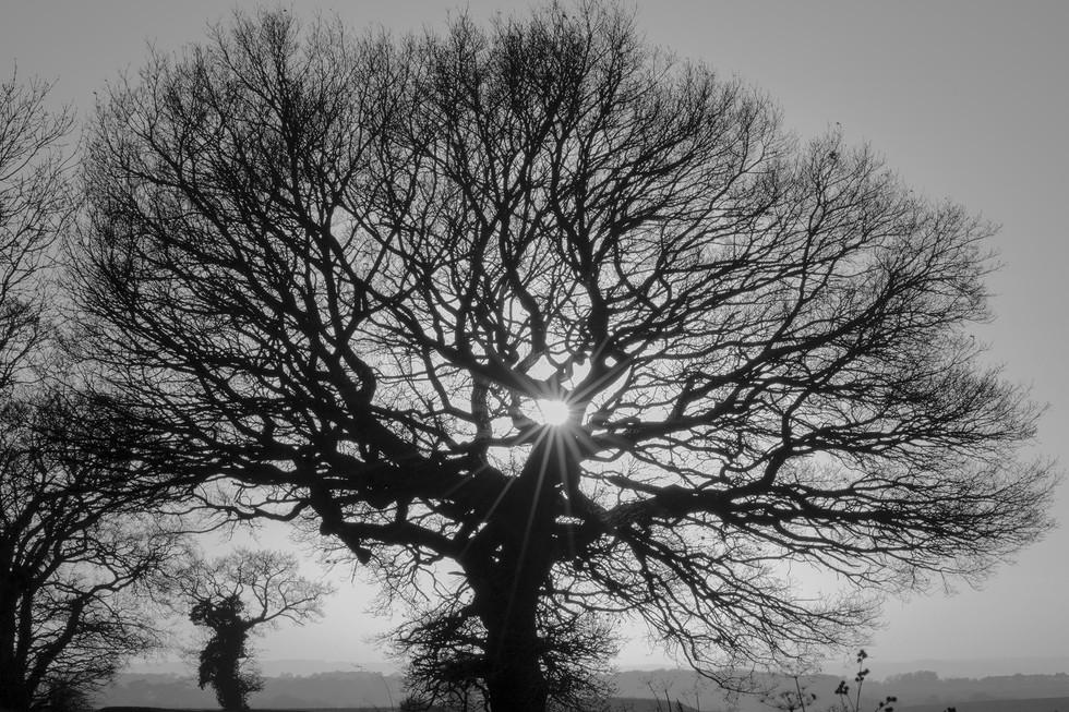 England Countryside #30