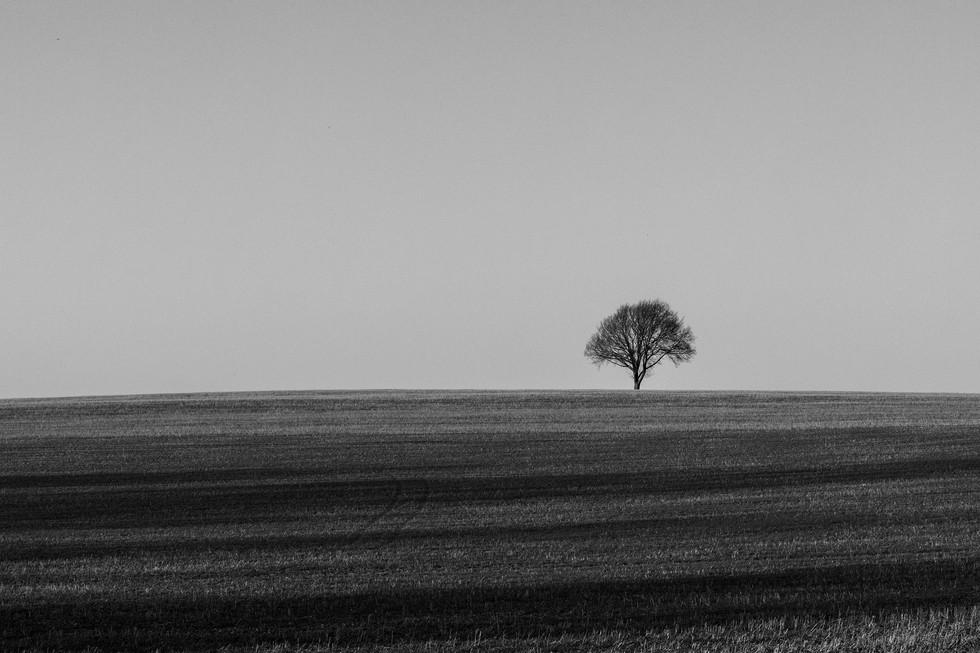 England Countryside #35