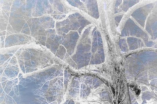 Kew Tree #08