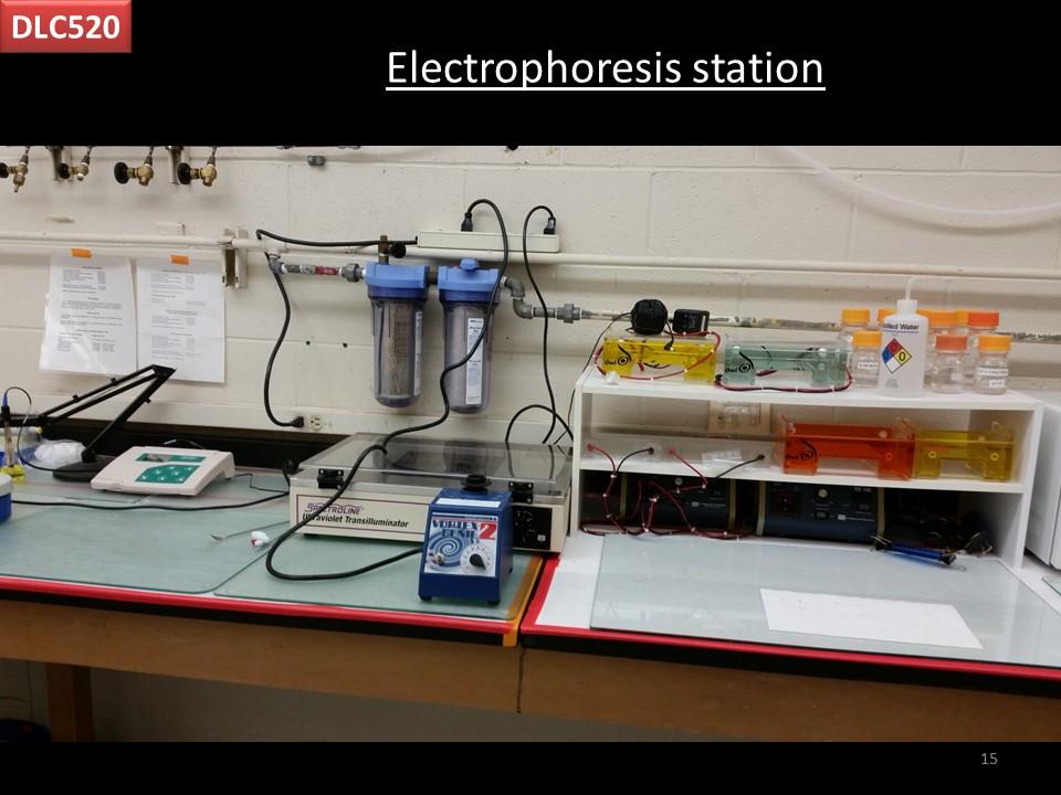 electrophoresis station