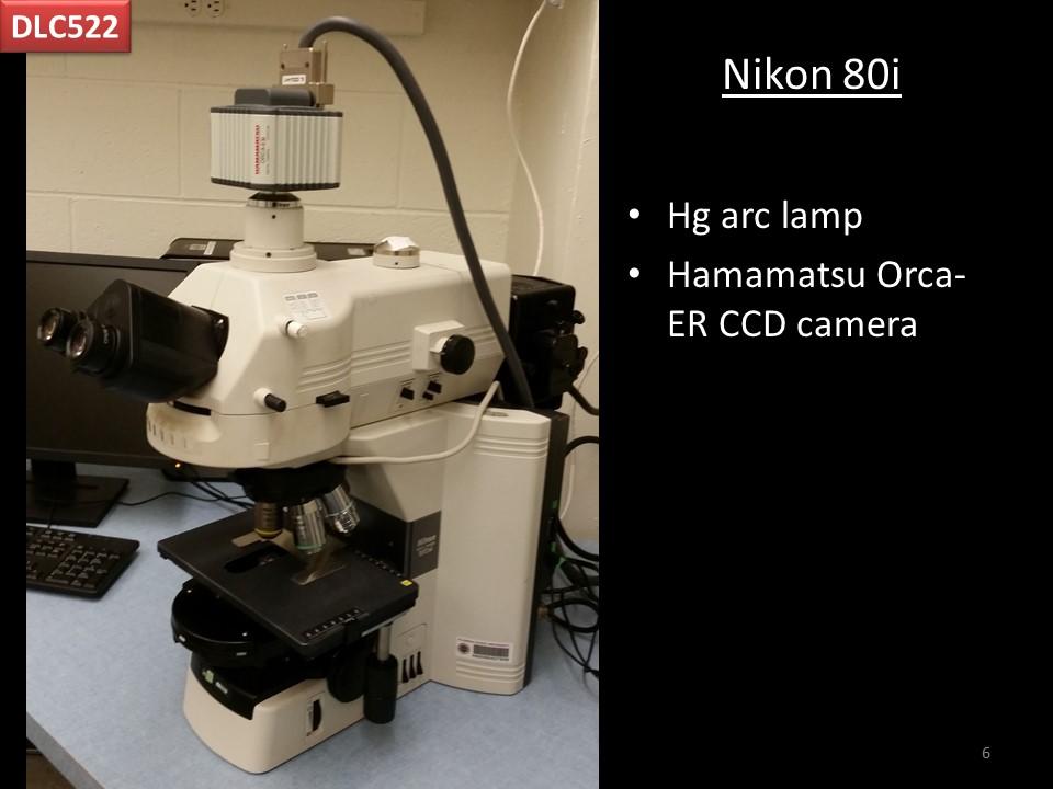 Nikon 80i
