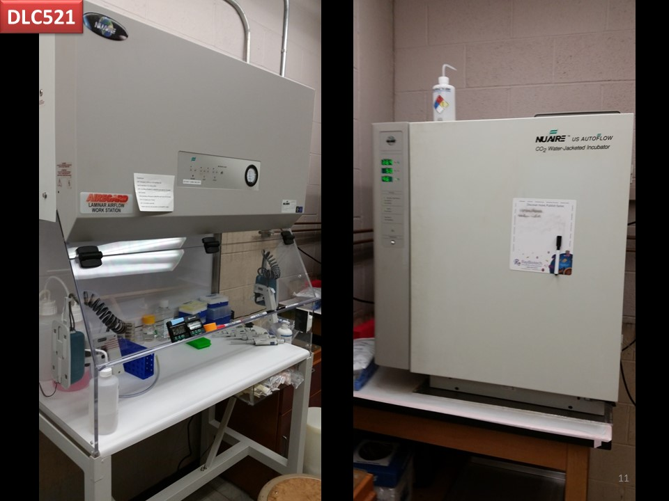 cell culture lab