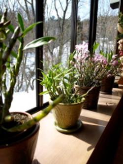 日当たりのいい窓辺でくつろいでください