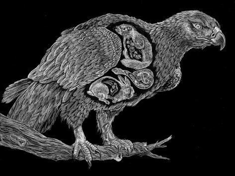 Apex Predators Series - Golden Eagle (A. Crysaetos)