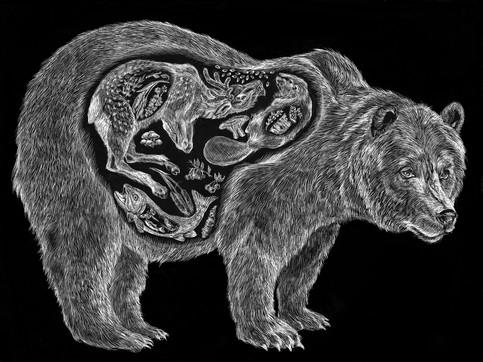 Apex Predators Series - Grizzly Bear (U. Arctos)