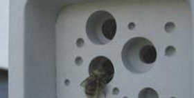 Small Bee Block