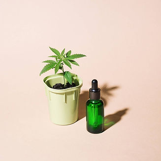 young-cannabis-bushes-in-pot-with-hemp-l