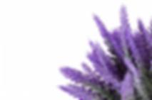 Screen Shot 2020-05-27 at 12.51.04 PM.pn