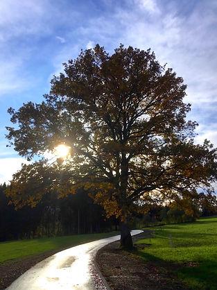 arbre1 petit.jpg