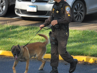 Our K-9 Deputies – More Than Just a Pretty Face