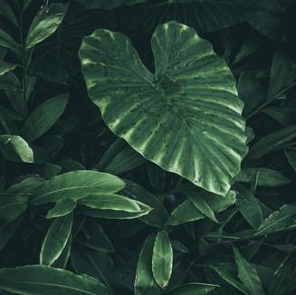 Green Heart Shaped Plant