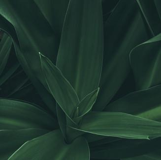 Macro Green Textures