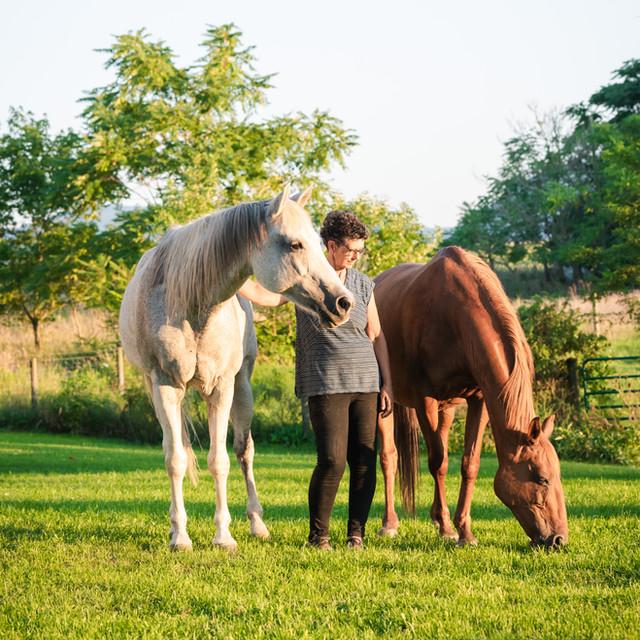 Horse Farm Photography