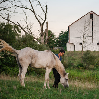 Horse Farm and Barn Photography