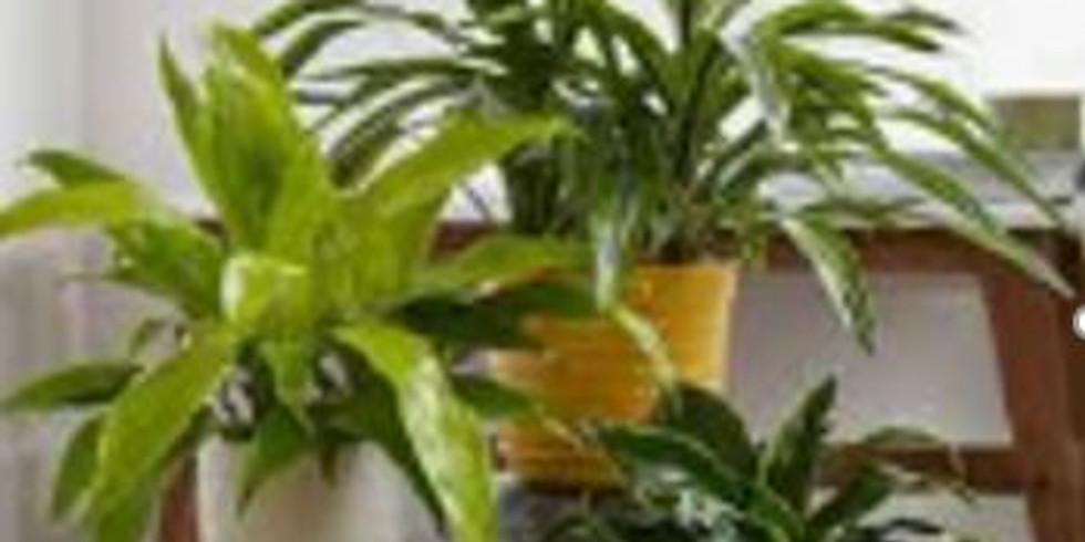 """Oct   """"Indoor Plant Care"""" TBD"""