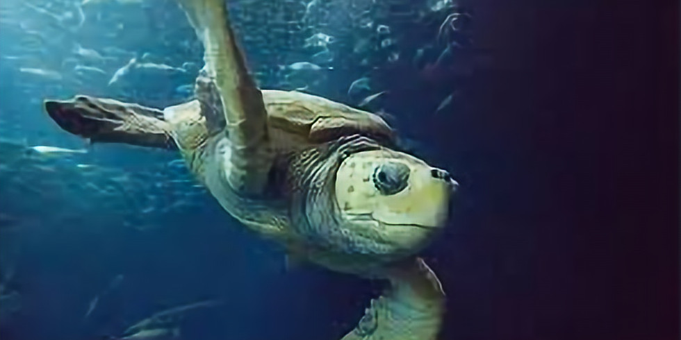 Virtual Breakfast Meeting - Kevin Mills, South Carolina Aquarium