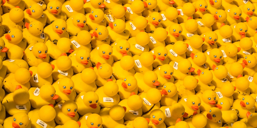 Duck Counting
