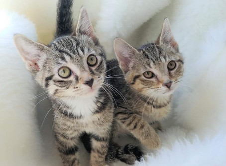 Tips for Letting Go When Your Foster Cat Is Adopted by Jane Harrell, petfinder.com