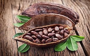 cocoa-beans-cacao-fruit-wallpaper-previe