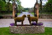 Weston-on-the-green sheep.JPG