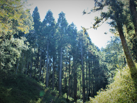 林務局探討物聯網林業應用