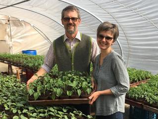 Jungpflanzenverkauf