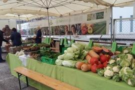 Kein Gemüse bei frostigen Temperaturen