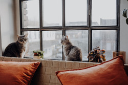 theaddamsloftkatzen