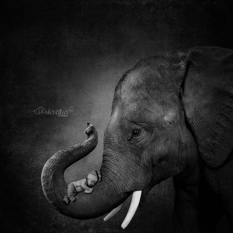 Mason elephant wm.jpg