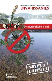 Myriophylle en épi: prévenons l'invasion!