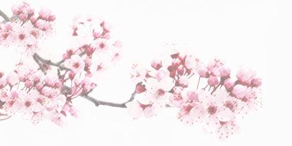 Cherryblossom_BOZZAAR.jpg