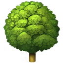 deciduous-tree_1f333.png