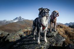 fantastic mountaindog
