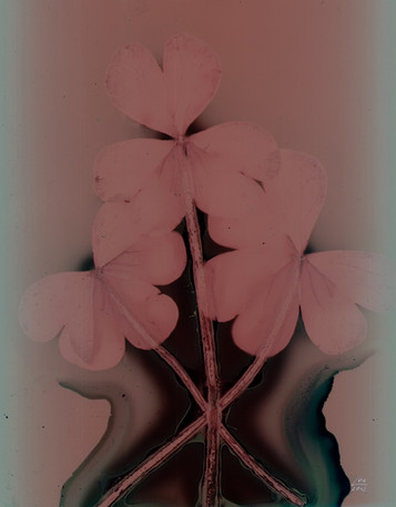 Sunny Flowers 30