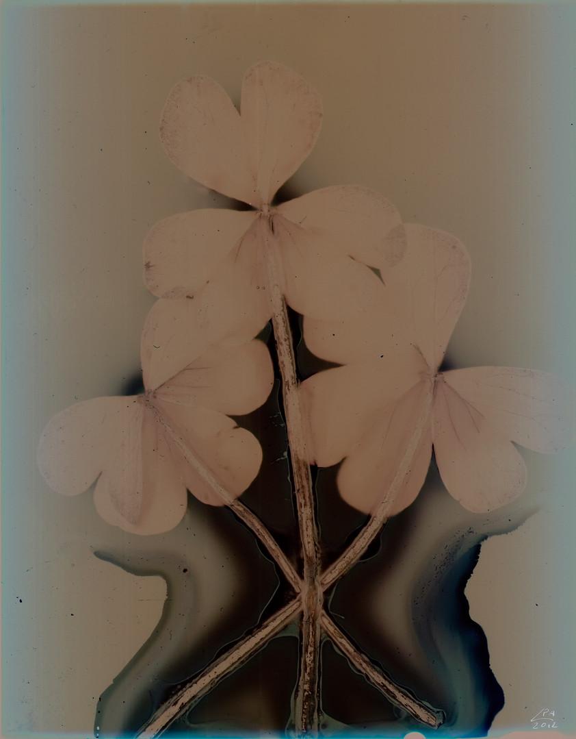 Sunny Flowers 35