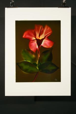 Sunny Flower 64