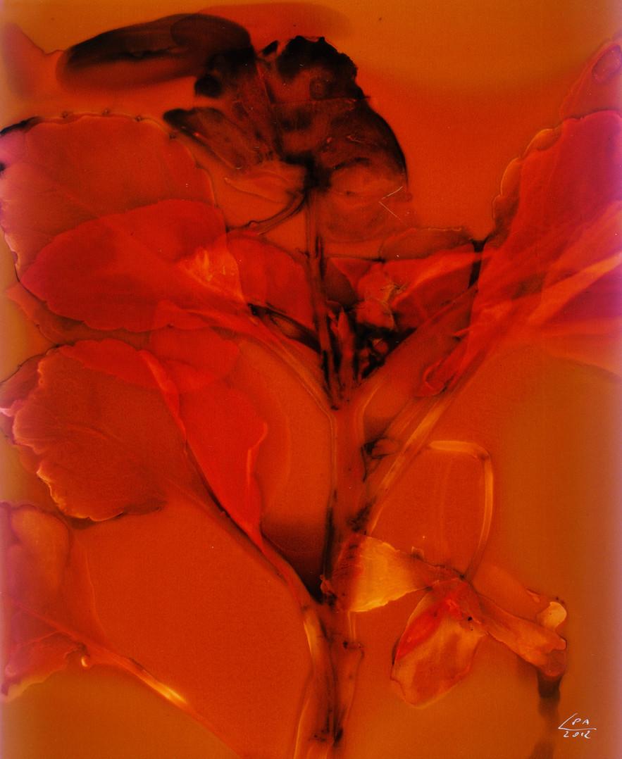 Sunny Flowers 18