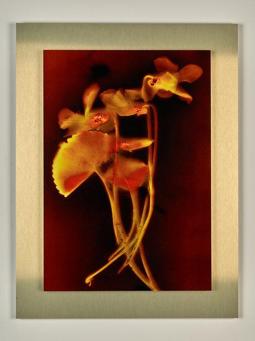 Sunny Flowers 54