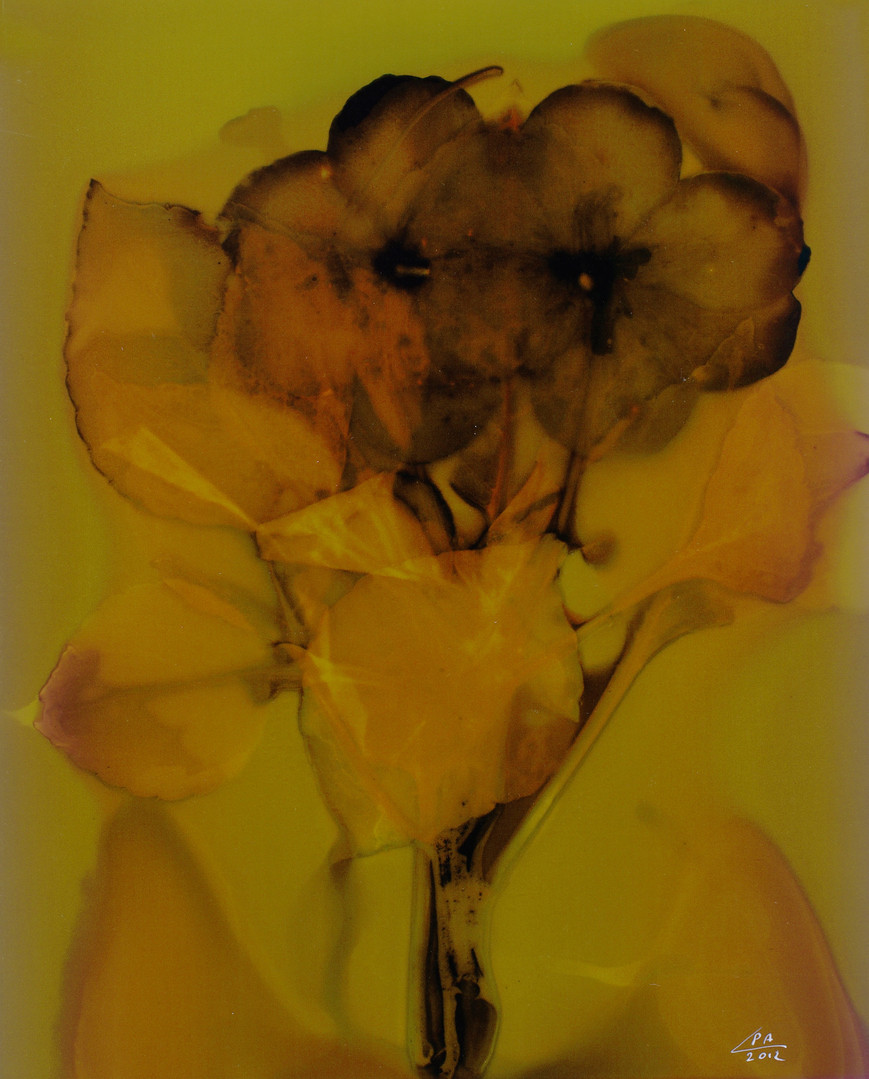 Sunny Flowers 17