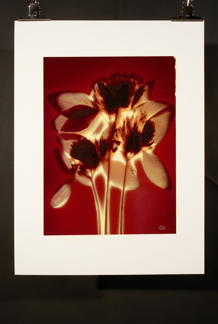 Sunny Flowers 65