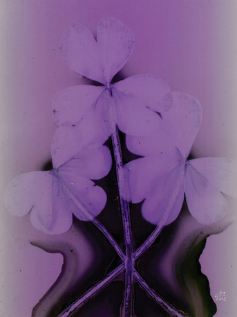 Sunny Flowers 42