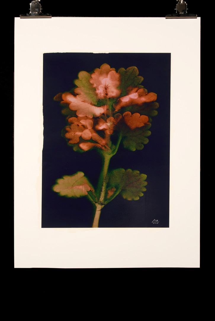 Sunny Flowers 55
