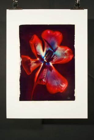 Sunny Flower 58