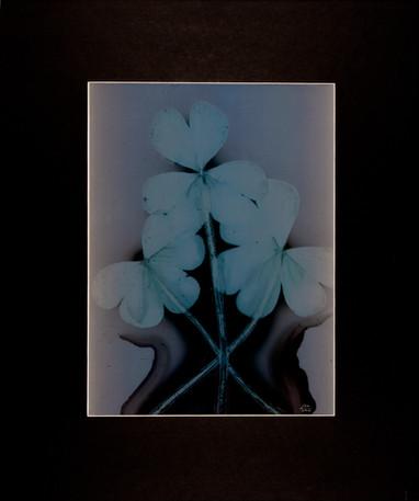 Sunny Flower 28