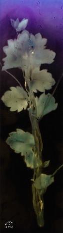 Sunny Flowers 51
