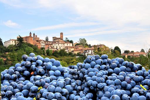 Paesaggi vitivinicoli patrimonio dell'UN