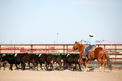 Outdoor Arena Ranch Sorting